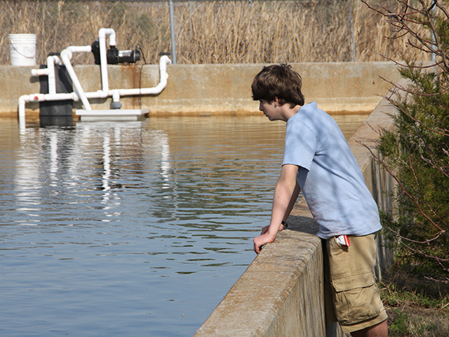 Student observes at the fish pond, Sturgeon City