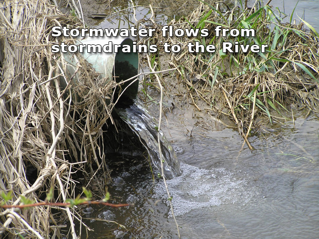 Stormwater flows from stormdrains to the River